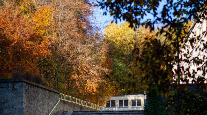 Jesień wokół nas…leśna edukacja